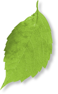 Web design leaf